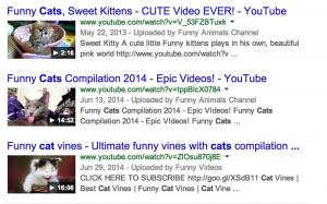 Keyword gatos