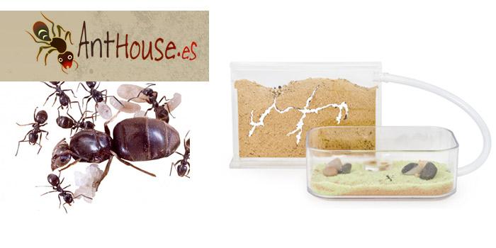 tienda online hormigas